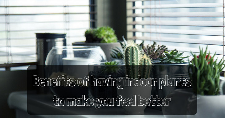 Benefits Of Having Indoor Plants To Make You Feel Better