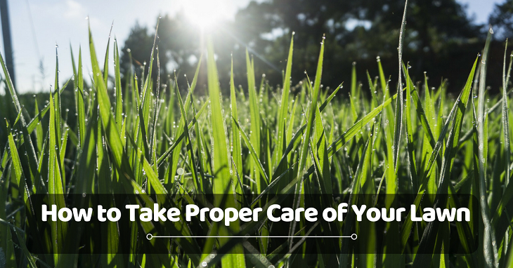 how to take proper care of your lawn