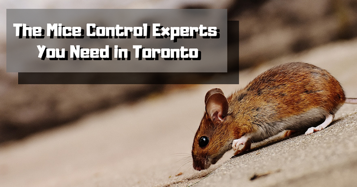 Mice Control Experts