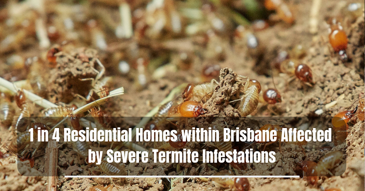 Severe Termite Infestations