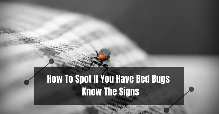 How To Spot If You Have Bed Bugs