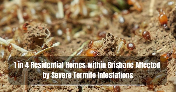 Severe Termite Infestations