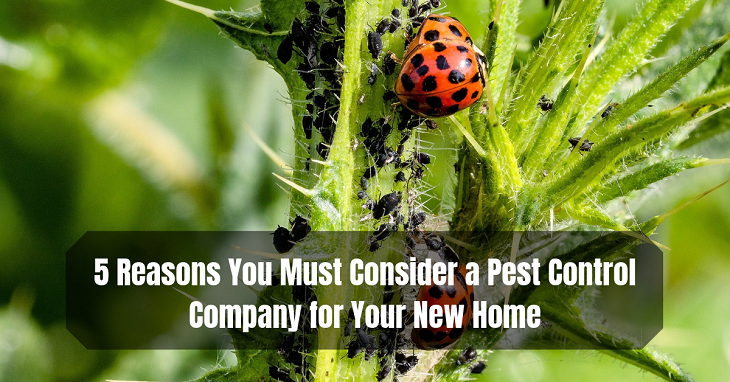 Pest Control Company for Your New Home